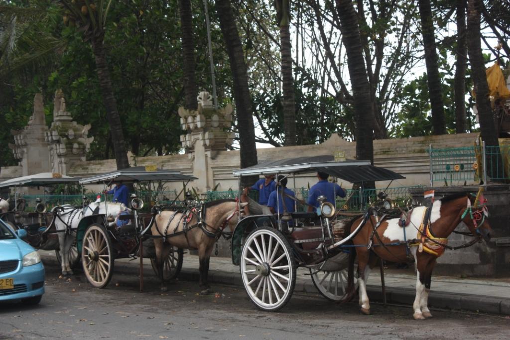 Лошади в Куте