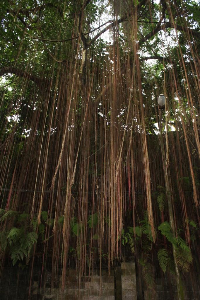 Джунгли-Бали