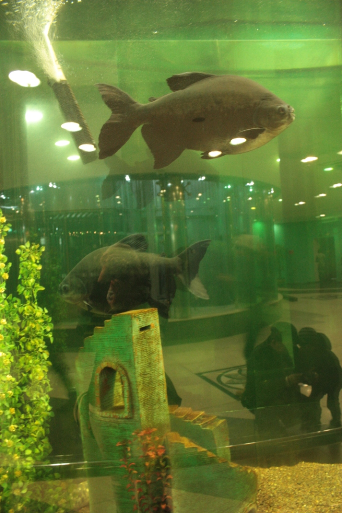 Байтерек-Астана-рыбы