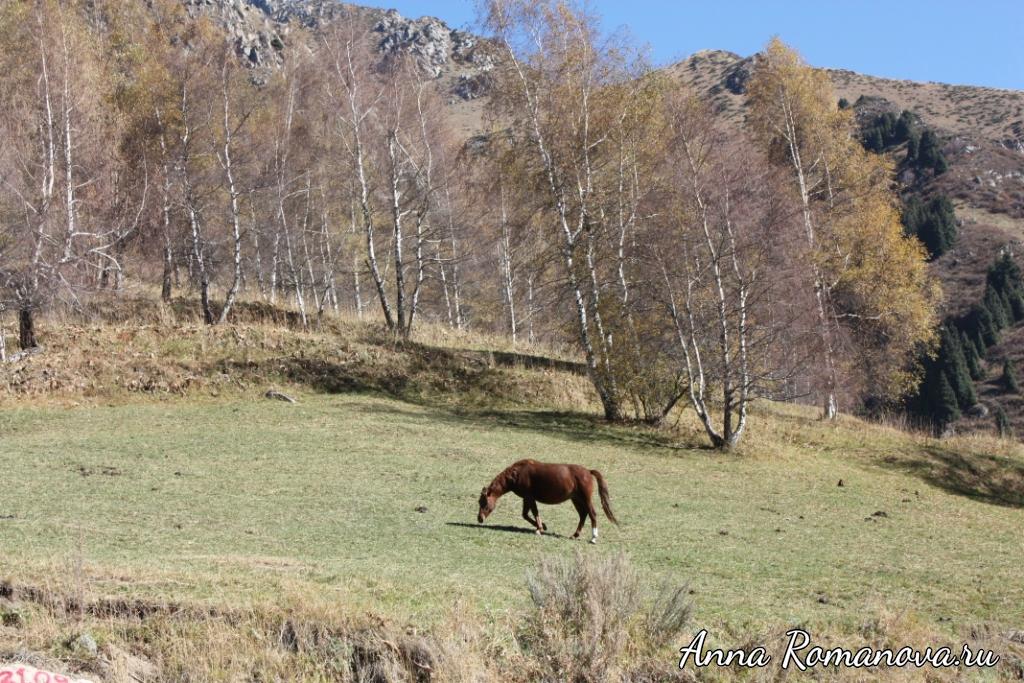 Лошади-в-горах-Тянь-Шань