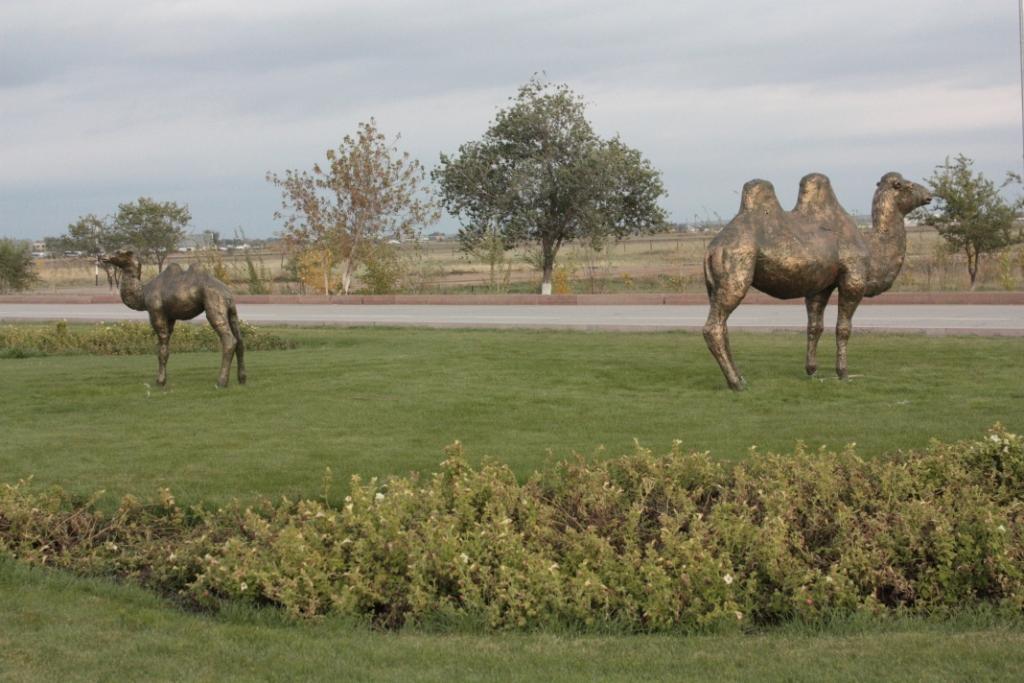 Верблюды-Казахстан