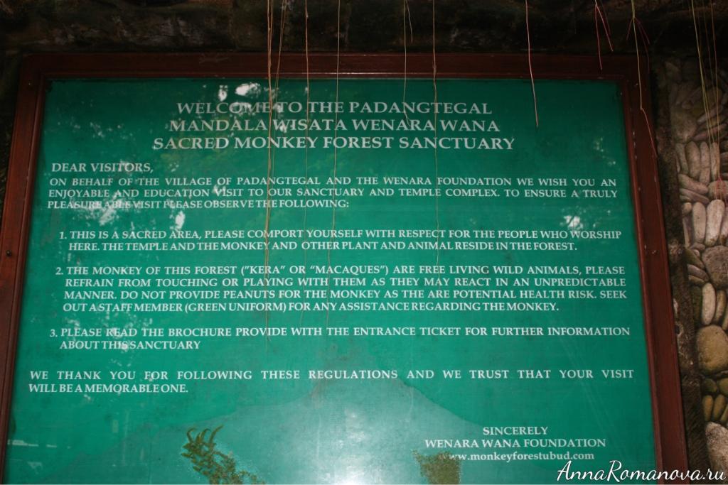 правила посещения леса обезьян