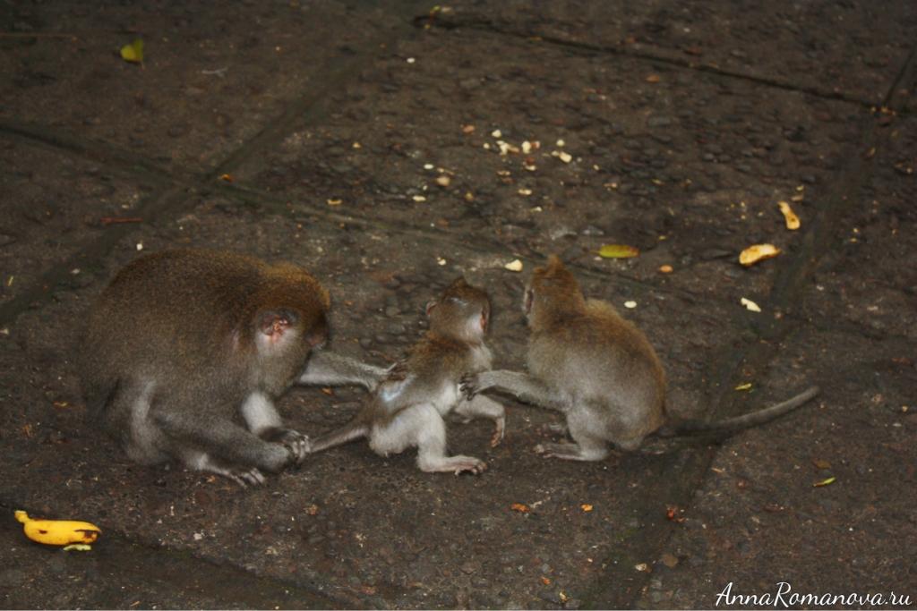 обезьяны чешут друг друга
