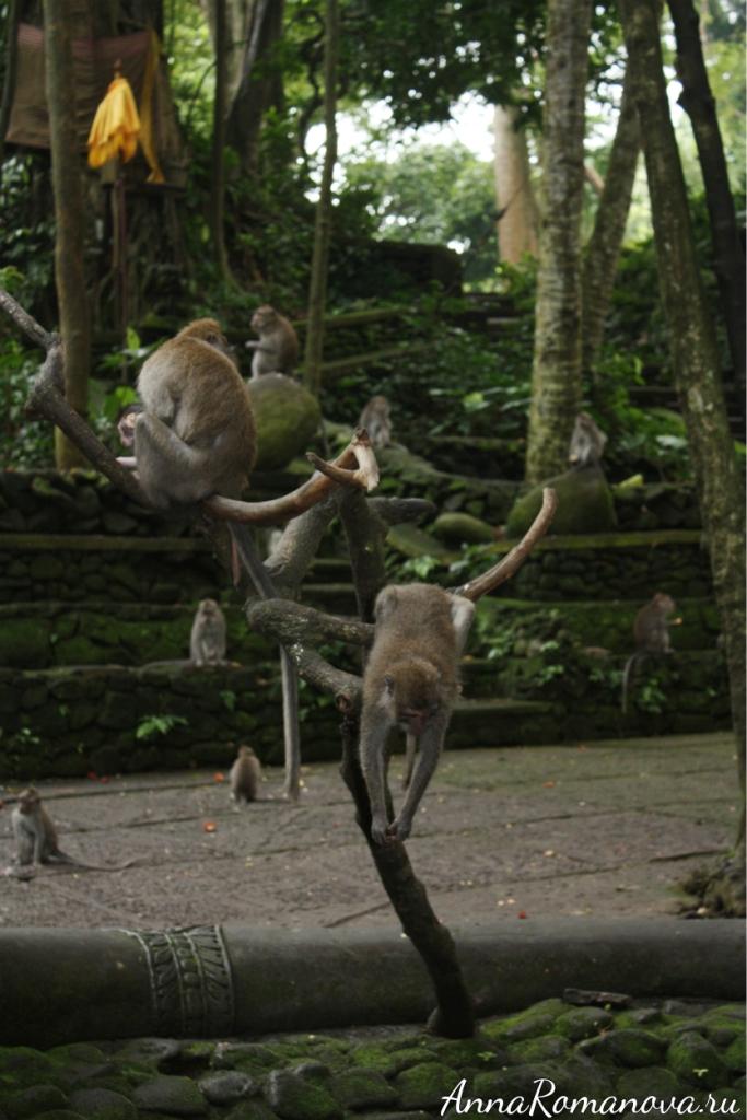 обезьяний лес в убуде
