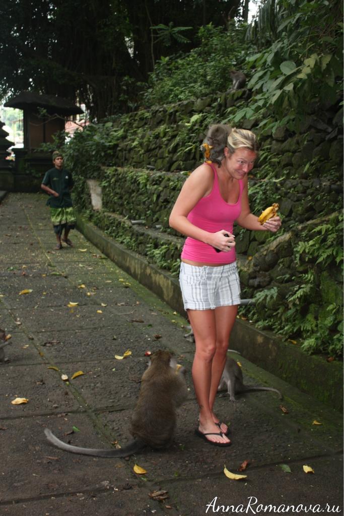 обезьяна на плече лес обезьян в убуде