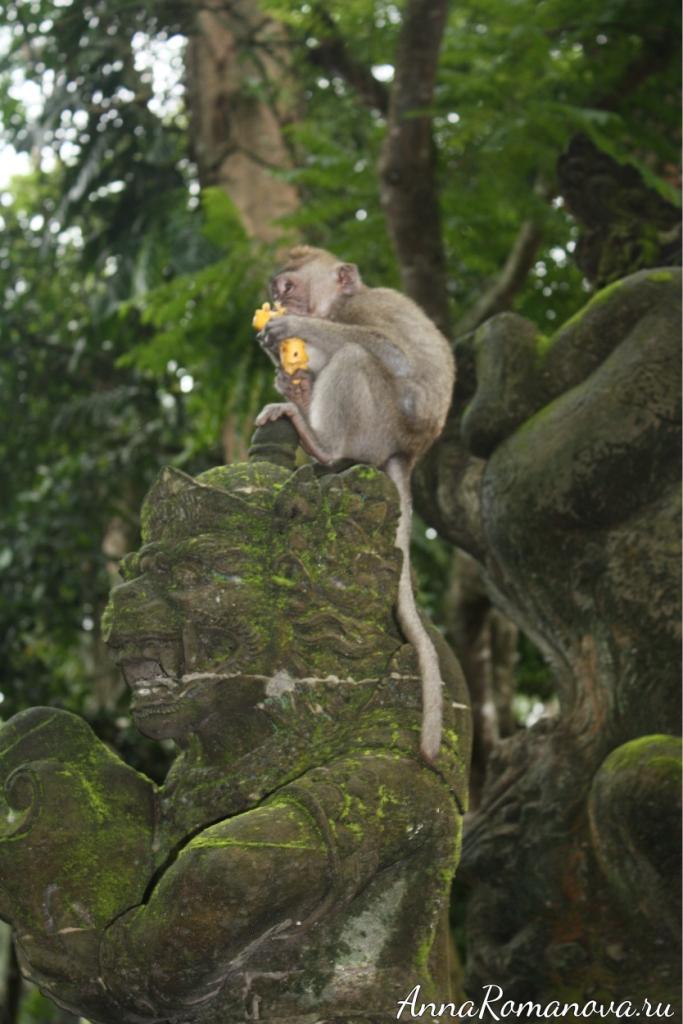 обезьяна с бананом лес обезьян