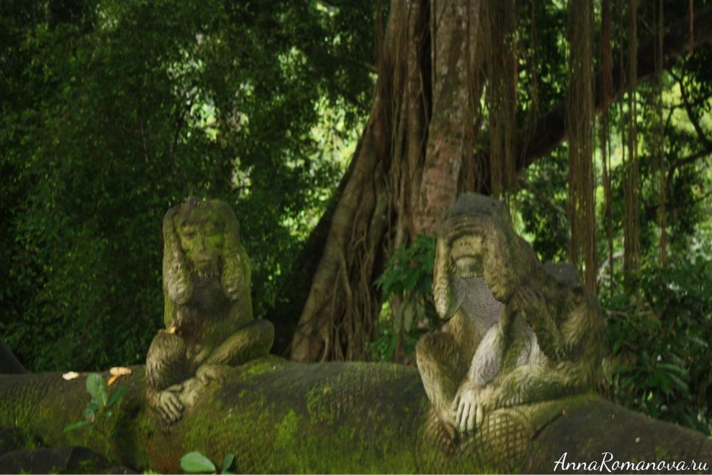обезьяны и баньян в лесу обезьян на бали
