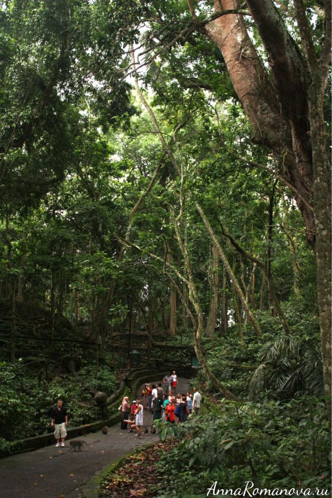 лес обезьян в убуде на бали