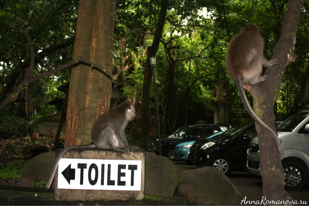 указатель туалета в лесу