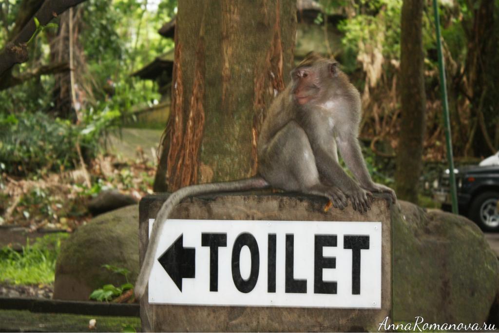 табличка в туалет