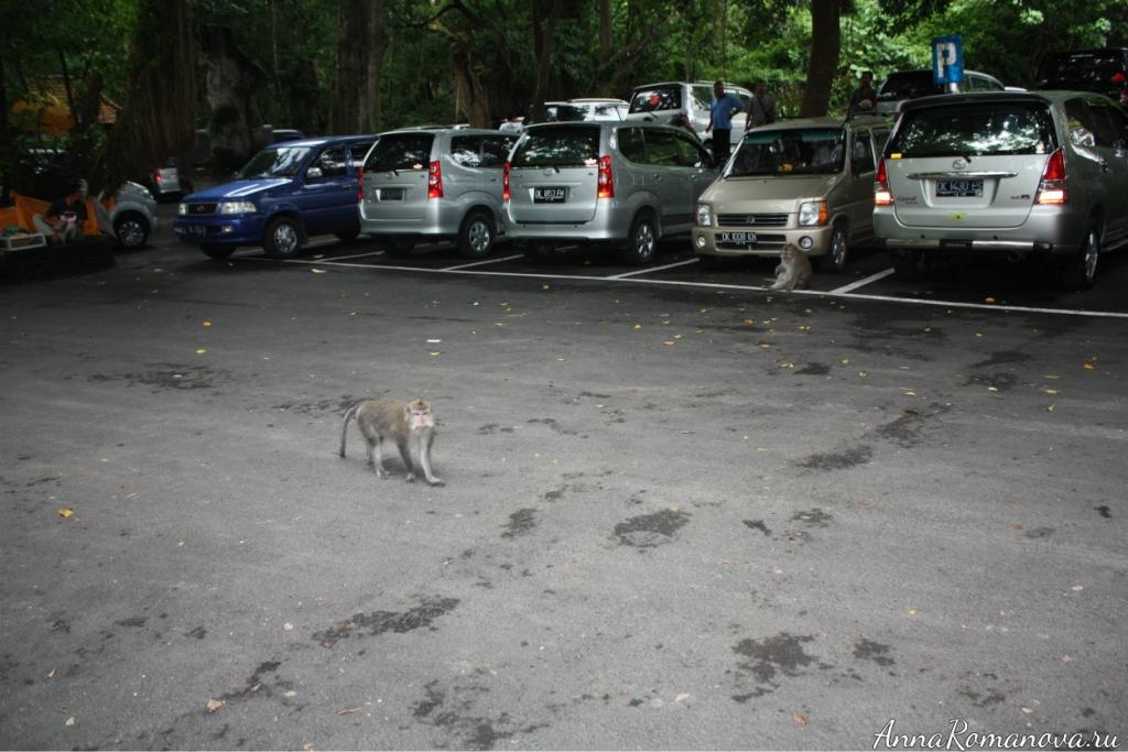 парковка в обезьяньем лесу в убуде