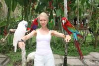 парк птиц на бали-попугаи на голове