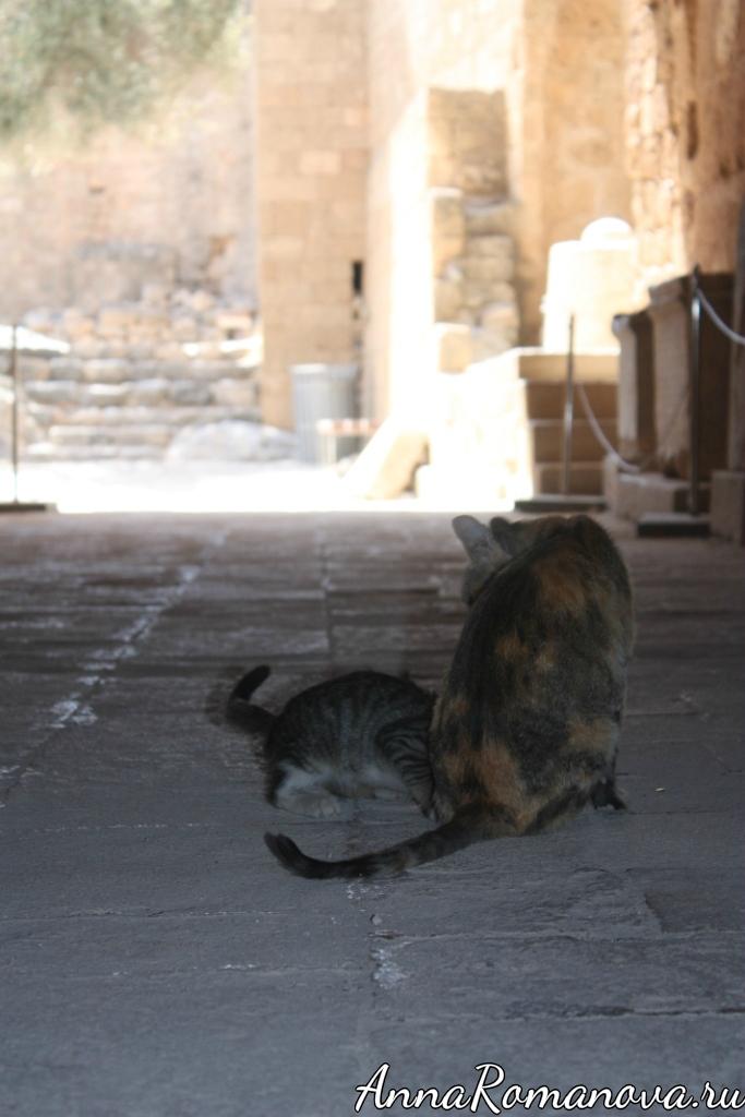 коты в греческом акрополе
