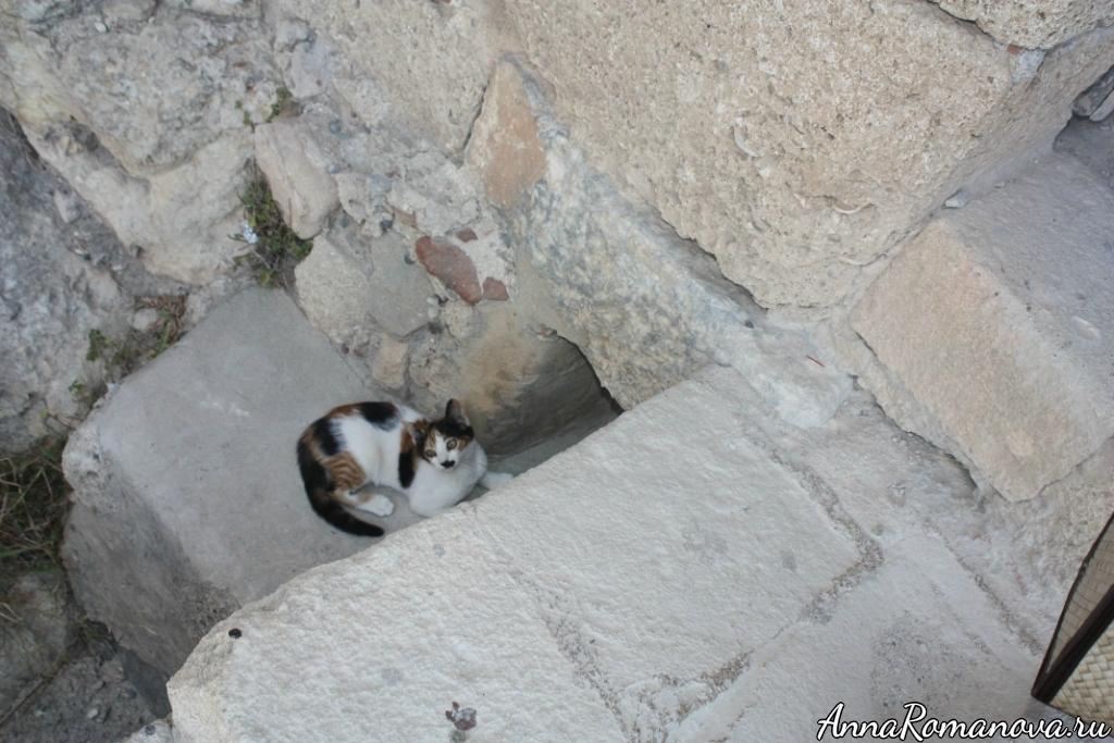 коты в Греции