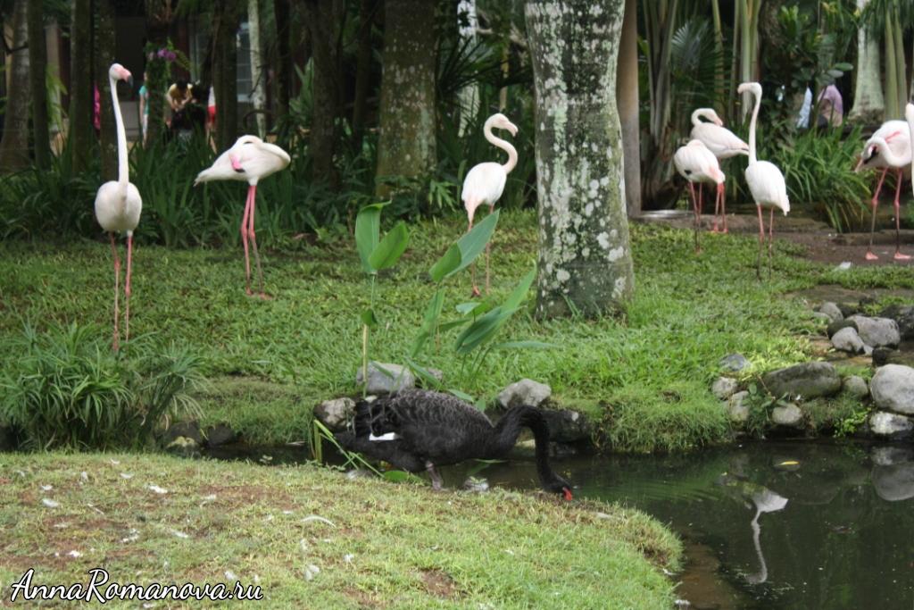 фламинго на бали