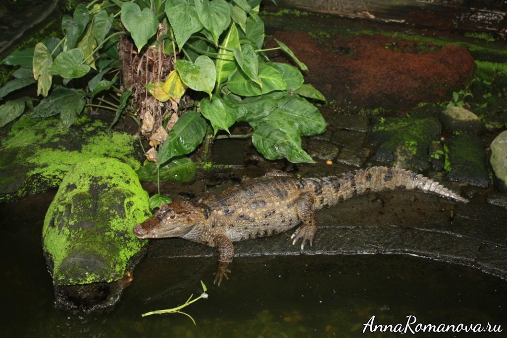 крокодилы в парке рептилий на бали