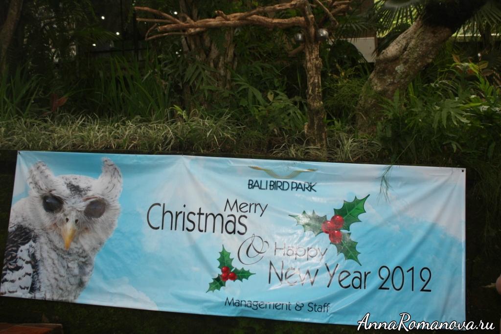 парк птиц на острове бали