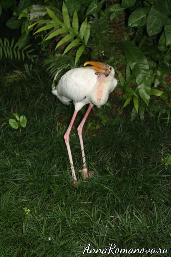 длинноногая птица на бали