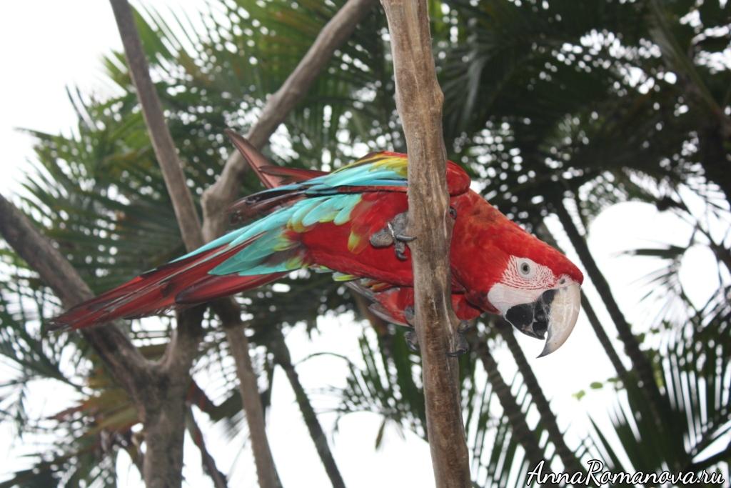 желто-сине-красный попугай
