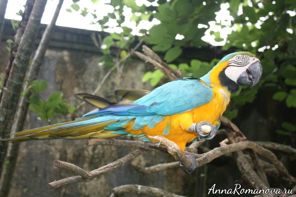 желто-синий-попугай