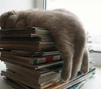 устала от учебы
