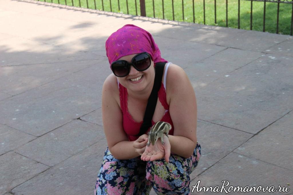 бурундук в Индии