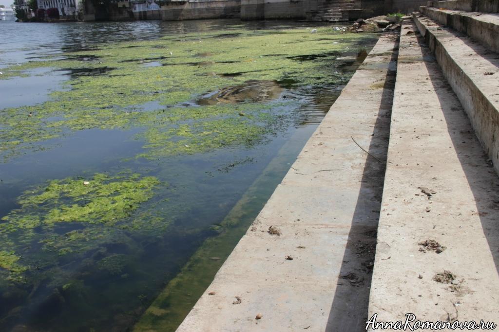 Грязная вода Удайпура