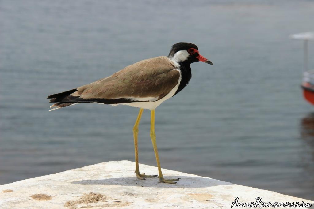 Птица в Индии