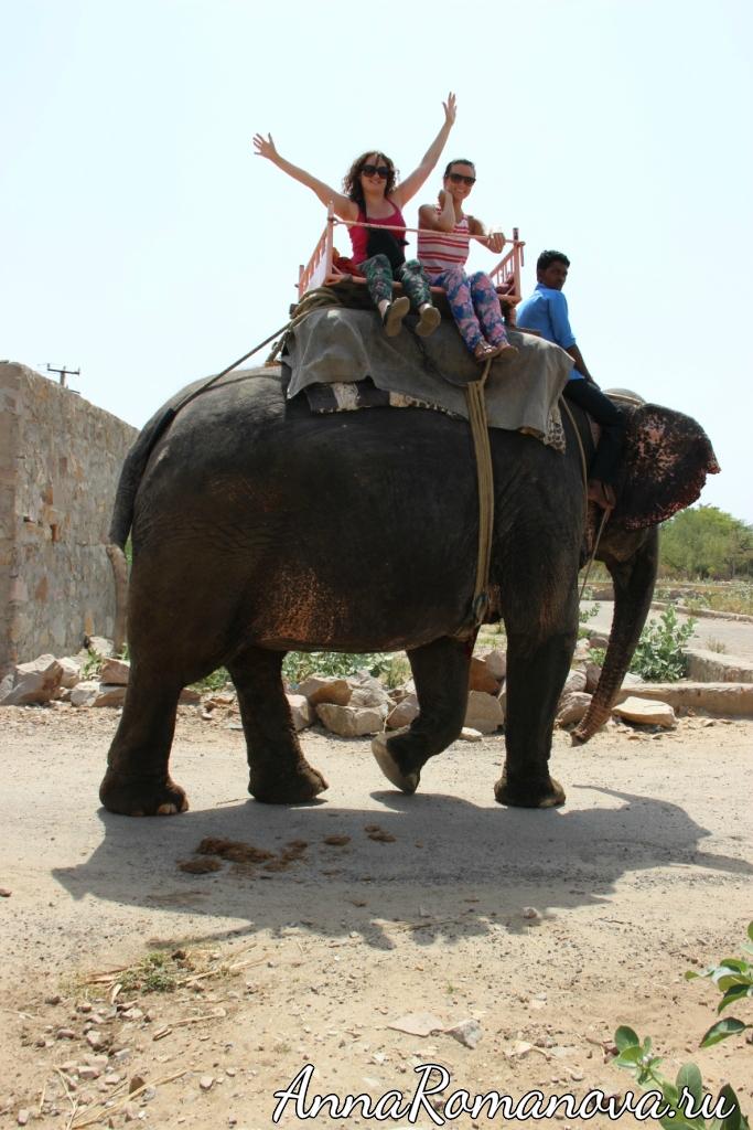 прогулка на слоне в Индии
