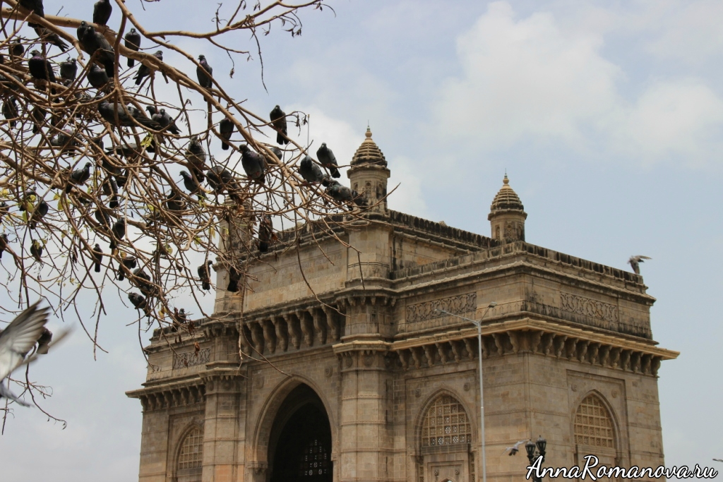 ворота индии и голуби