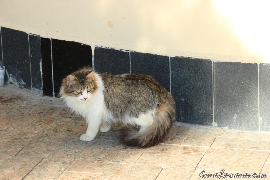 коты в Сочи