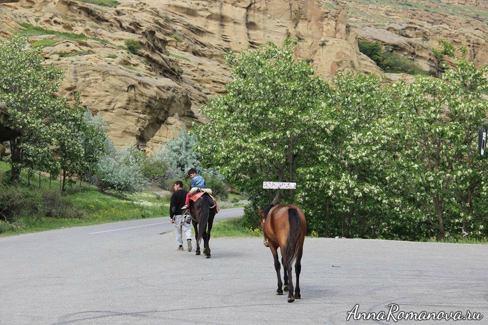 катание на лошадях уплисцихе