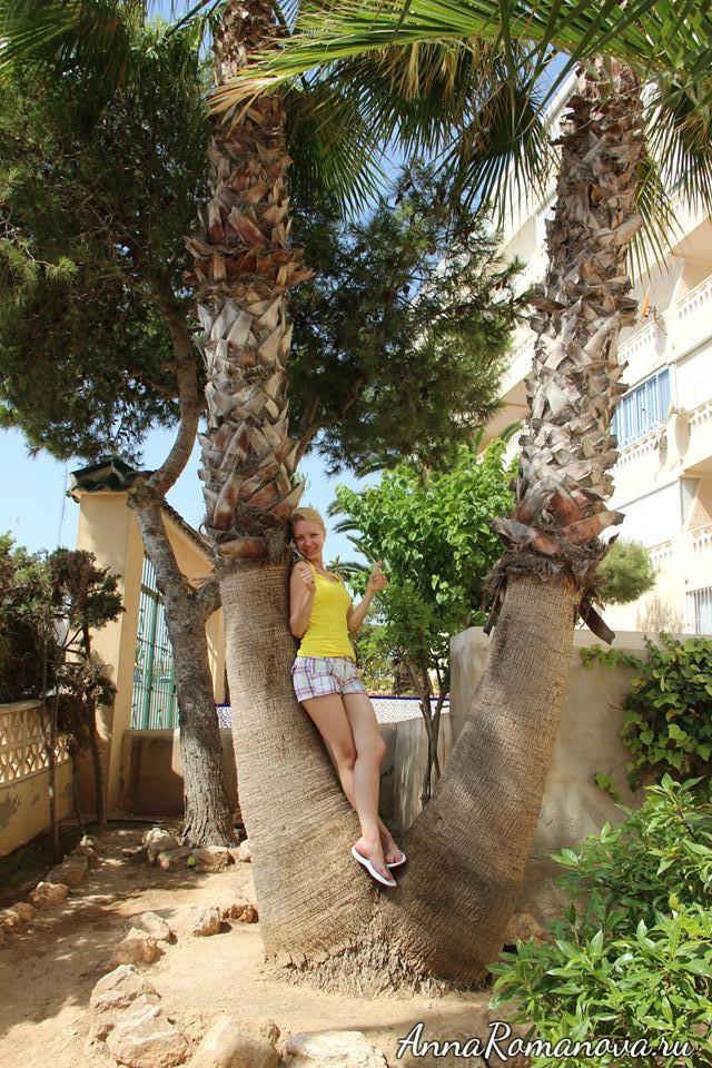 сдвоенные пальмы